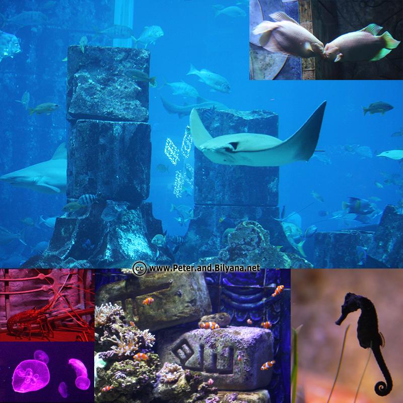 atlantis-aquarium