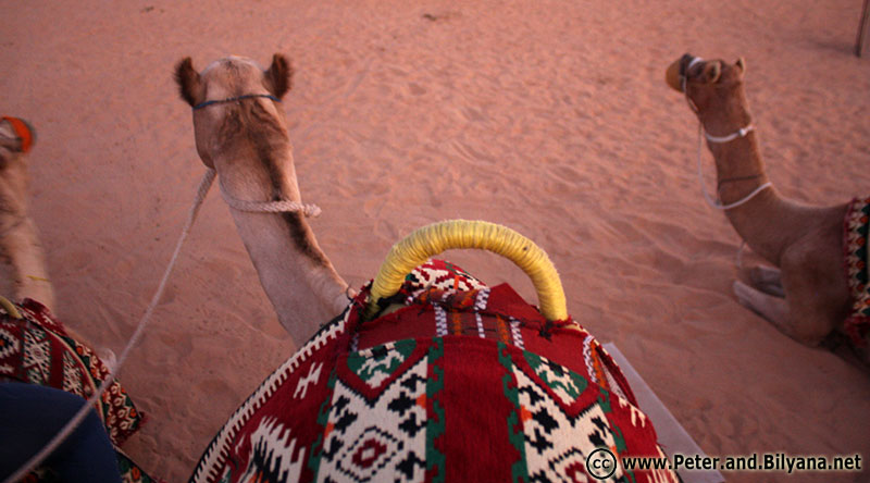 on-top-of-camel