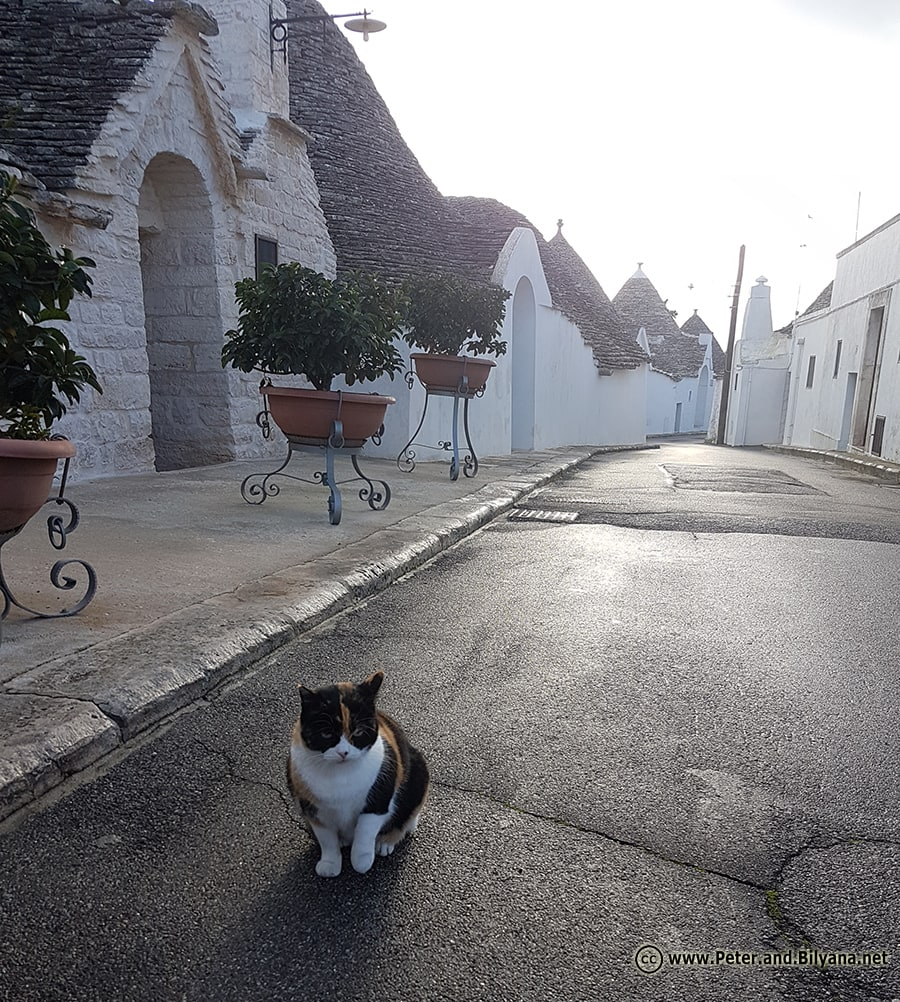 cat-trullo